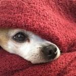 【朝、寒くて起きれない人集合!】冬の最強寝坊対策