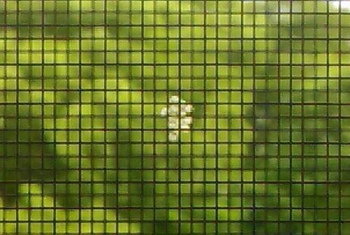 【10秒で終わる!】網戸に付いた白い卵の駆除方法 & 予防法