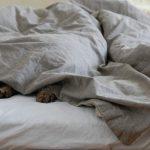 カビ臭い羽毛布団は「エタノール天日干し」で臭い除去!